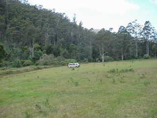 Nella campagna tasmana