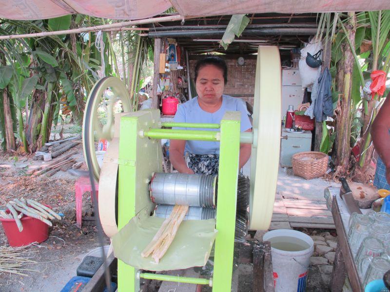 canna da zucchero birmania